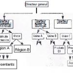 Les structures hiérarchique et fonctionnelle